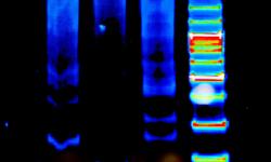 生命の分子機械が働く「しくみ」をとことん明らかにし、応用展開を目指す
